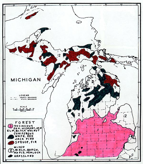 Michigan Vegetation